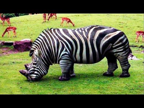 Животные, Которых Вы Увидите Впервые в Жизни | 19:43:35 | заполярный альпинист #fe14