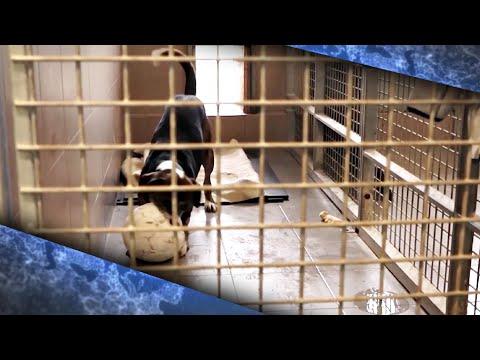 В приютах Чехии не осталось животных | 19:43:47 | критический прошлое #8228