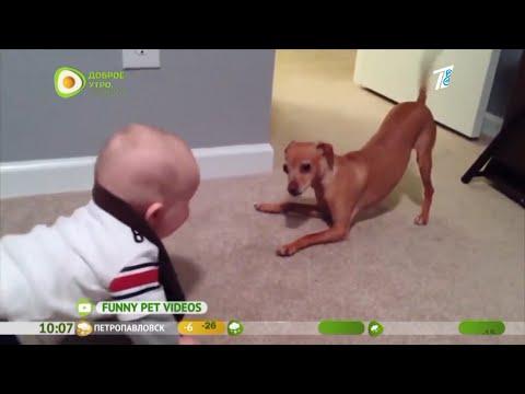 Вместе веселее: животные и дети   19:43:49   диверсионный обелиск #67b2