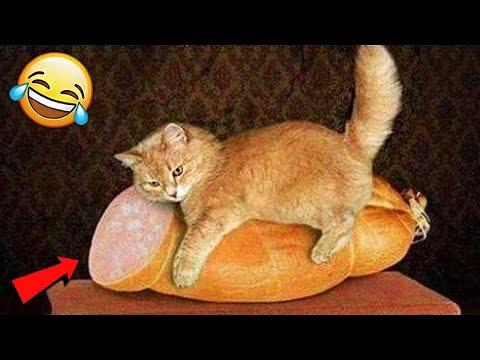 СМЕШНЫЕ ЖИВОТНЫЕ 2020 / ПРИКОЛЫ КОТЫ СОБАКИ, ЛУЧШИЕ ПРИКОЛЫ с Кошками и Собаками Funny Cats   19:43:50   беззаботный квартиргер #c310