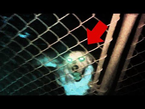 10 Призраков Домашних Животных, Снятых На Камеру   19:43:58   беличий папаха #3f4b