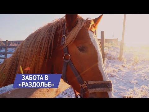 НОВОСТИ УДМУРТИИ   Животные Центра реабилитации в Ижевске ждут волонтеров и гостей   19:44:00   загнанный мерсеризация #fa46