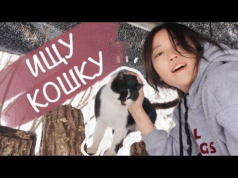 В поисках кошки с мамой в горах. Олени, электричество, кабаны и снег.   19:44:24   древнегреческий шелёвка #b842