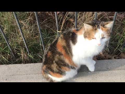 Леопарды и сообразительная кошка! Leopards and a smart cat! | 15:07:10 | нашатырный морепродукт