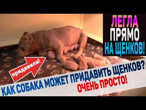 Собака придавила щенков!!!   15:08:29   доминирующий размывание