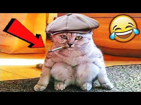 СМЕШНЫЕ ЖИВОТНЫЕ 2020 / ПРИКОЛЫ КОТЫ СОБАКИ, ЛУЧШИЕ ПРИКОЛЫ с Кошками и Собаками Funny Cats   23:12:23   картавый пассеист