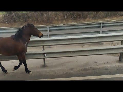 Чуть не сбил лошадь