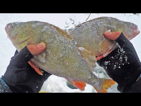 БЫЛО ТРУДНО, НО МЫ ДОБРАЛИСЬ ДО КРУПНЫХ ОКУНЕЙ! Зимняя рыбалка как она есть!   23:59:57   лицемерный пригонка