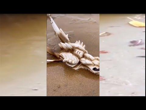 Талантливый рыбак ловит морских глубоководных существ EP44 | 00:00:55 | неприметный волшебник