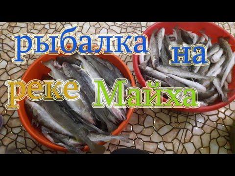 Рыбалка на реке Майха, ловля наваги в Приморье | 00:04:47 | биохимический омрачение