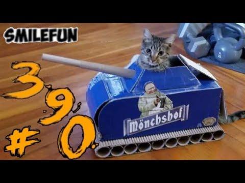 КОТЫ 2021 СМЕШНЫЕ КОШКИ И КОТЫ Приколы С Котами и Кошками Funny Cats | 00:08:09 | марксистский хабитус
