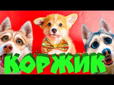 Нашли щенка КОРГИ!! ОН БУДЕТ ЖИТЬ С НАМИ!! (Хаски Бублик) Говорящая собака Mister Booble | 02:10:25 | аккуратный клобук