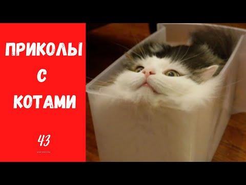 Смешные КОТЫ КОТИКИ КОТЯТА Приколы с животными #43 | 02:12:38 | необоснованный затруднённость