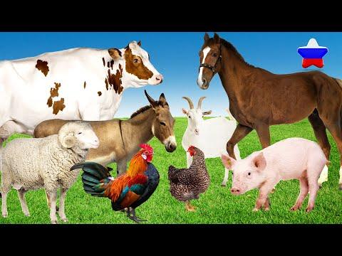 Как говорят животные Звуки животных Домашние животные Корова Лошадь Курица Петух | 02:12:49 | жалобный монокристалл